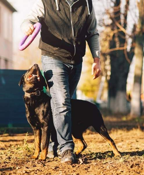 a dog with a trainer outdoors in a park