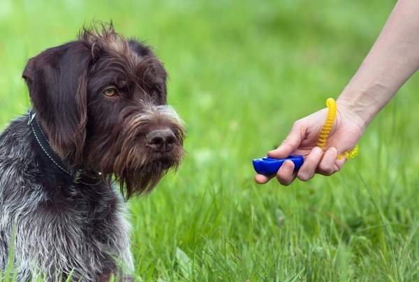 Dog and hand of the trainer-guide to finding a dog trainer