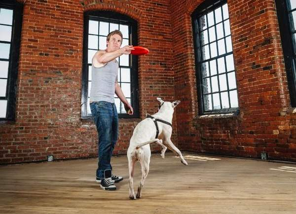 Dog trainer throwing a frisbee and a dog trying to catch it