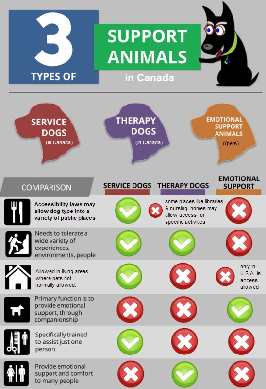 3 types of animal support chart - Service dogs, Therapy dogs, Emotional support