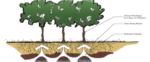 Phytoremediation – Cape Cod Green Infrastructure Guide