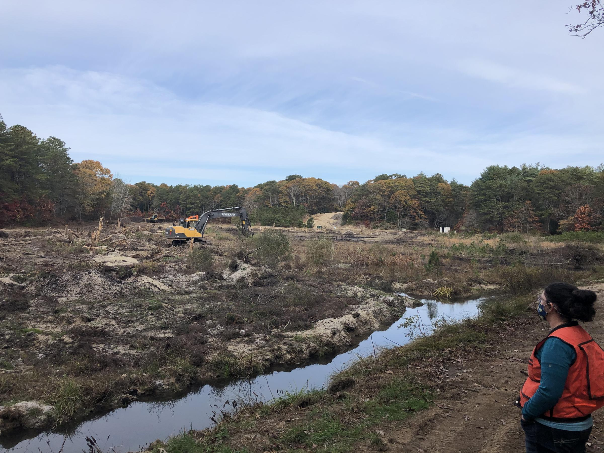 Cranberry Bog Restoration