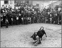 Um capinha em acção (foto Arraianos.net)
