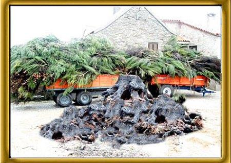 Madeiro de Natal em Ruivós - Sabugal