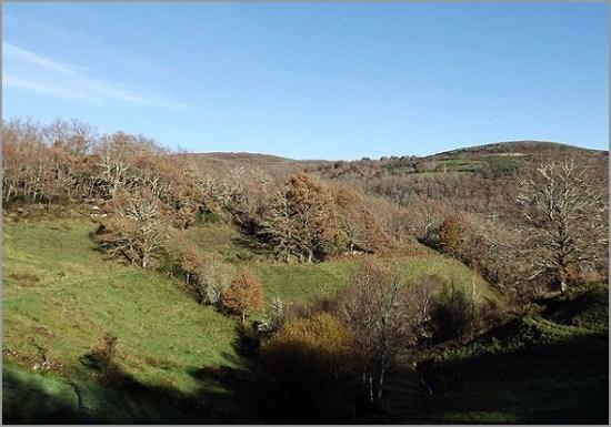 Carvalhal Negral - Sabugal - Capeia Arraiana