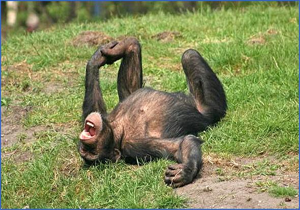 Ri macaco! Ri!