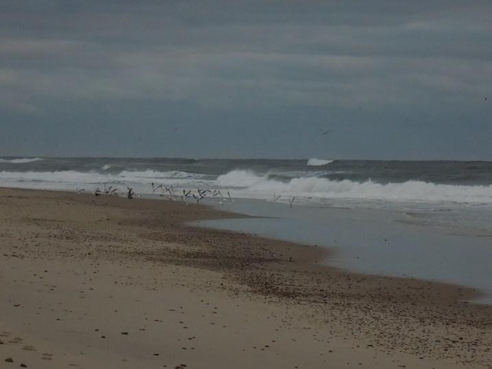 birds-on-the-beach-3