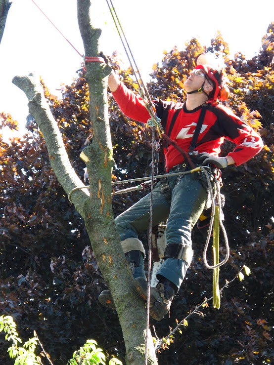 Contact Capella Tree Service