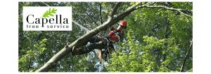 Banner for Capella Tree Service