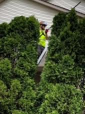 hedge-trimming-waterloo