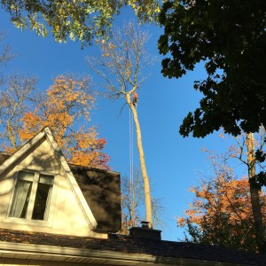 Tree Service Cambridge