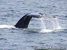 whaletalebyLeoKulinskiJr