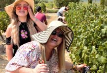 Grande Provence Harvest Festival