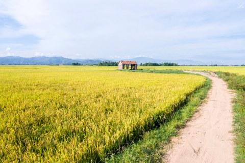 Lối quê _ Lư Quyền   Lối quê dập dìu sóng lúa Thắm tươi biển…   Flickr