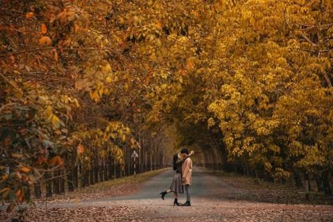 Lãng mạn như MÙA THU HÀN QUỐC ở rừng cao su cách SG BD | Bài viết | Foody.vn