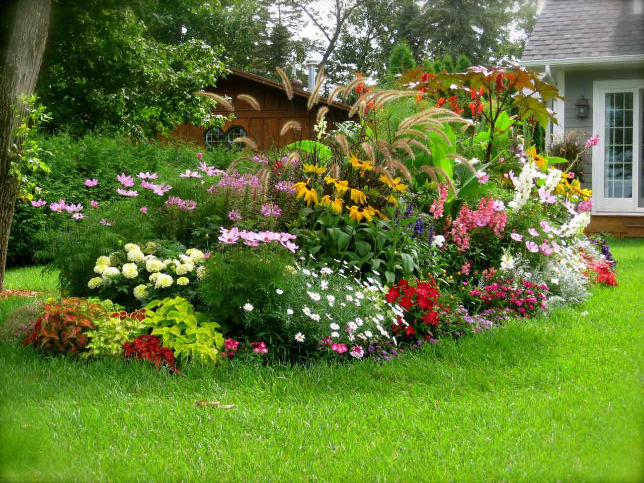 Tổng hợp hình ảnh cây cảnh đẹp nhất - Cây trồng trong nhà