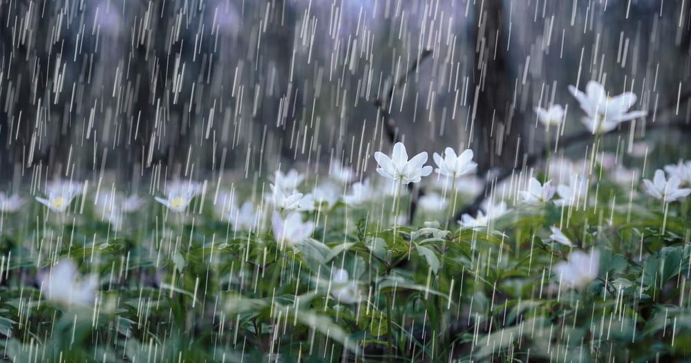 Những hình ảnh trời mưa đẹp và lãng mạn nhất