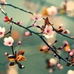 Khát vọng mùa xuân