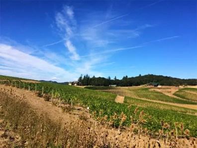Willamette Valley Vineyards, Turner, OR