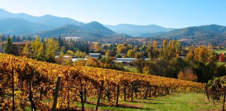 Quail Run Vineyards in Fall