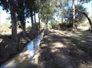 Un canal ancho y profundo se esta abriendo a lo largo de los rieles, por entre medio de los antiguos árboles que quedan del ferrocarril