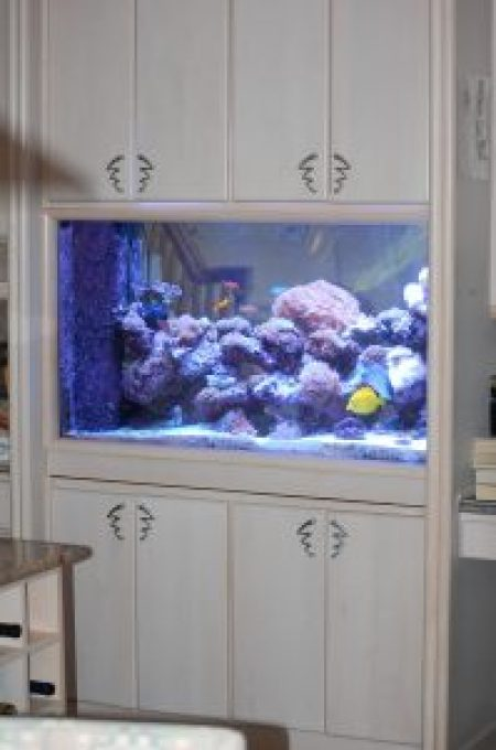 custom built-in aquariums northern va