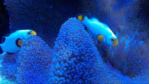 fish stores northern va virginia