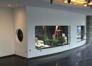 washington dc aquarium installation