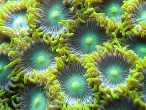 aquarium service company alexandria seven corners fairfax