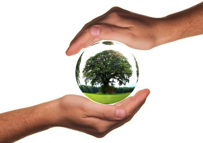 Two hands holding a tree i a crystal ball