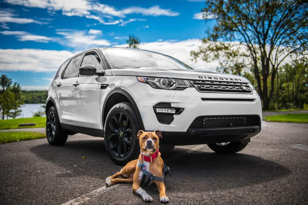 dog with SUV