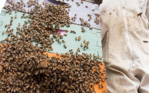 beekeeper_02