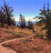 Walker_bristlecone_pine_trail