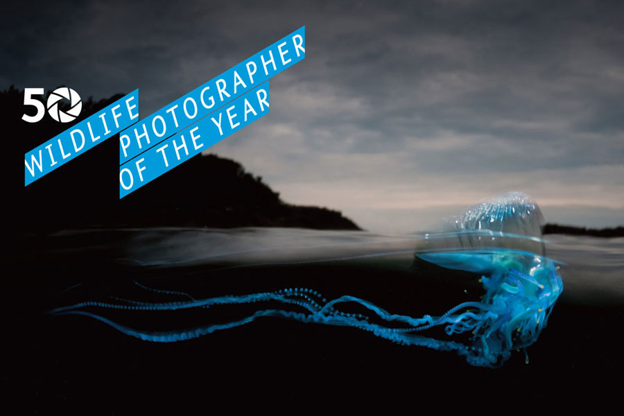 A Milano gli scatti di Wildlife Photographer of the Year