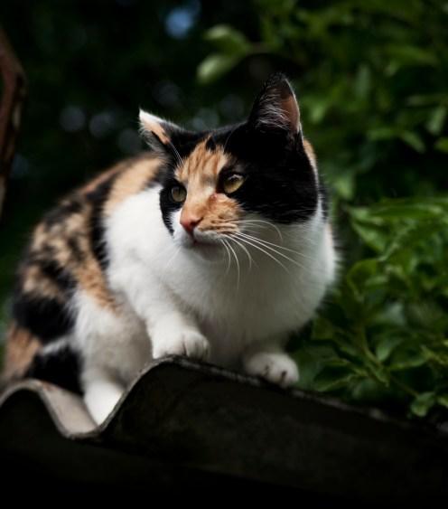 Katze | lacapocuoca.at