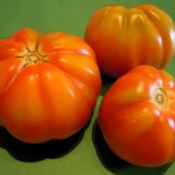 Pomodoro cuore di bue2€/kg