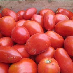Pomodori da sugo<ul> <li> 1€/kg (ordini dai 20kg in su) </li>  <li> 1,2€/kg (per ordini sotto i 20kg) </li></ul>