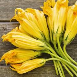 Fiori di zucca0,20€/fiore
