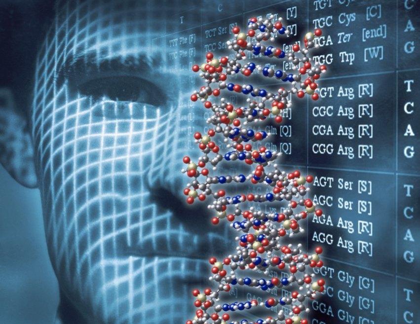Human DNA --- Image by © William Whitehurst/CORBIS