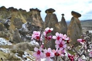 Цветы миндаля на фоне каменных столбов