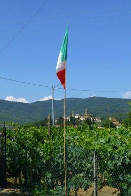 Vineyard & Castiglion Fibocchi