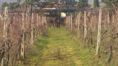 Hut Brooms near the vinyeard