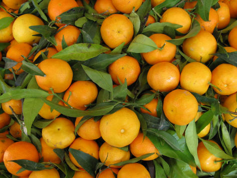 Image result for wild oranges