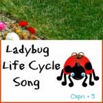 Ladybug Life Cycle Song