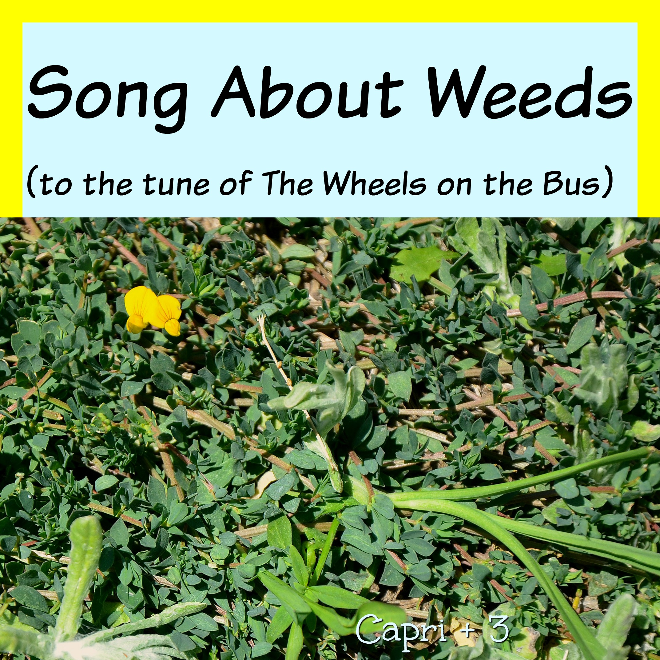 Song About Weeds-to the tune of The Wheels on the Bus