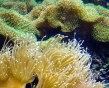corals & anemones
