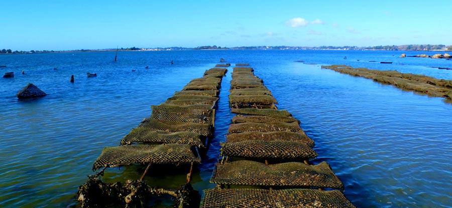 parc à huitres - golfe du morbihan - ile de boed - captain marée - ostreiculeur traditionnel - huitres naturellesel