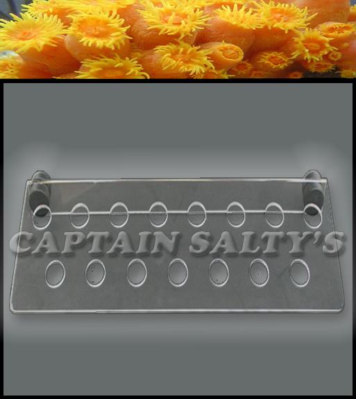 captain saltys