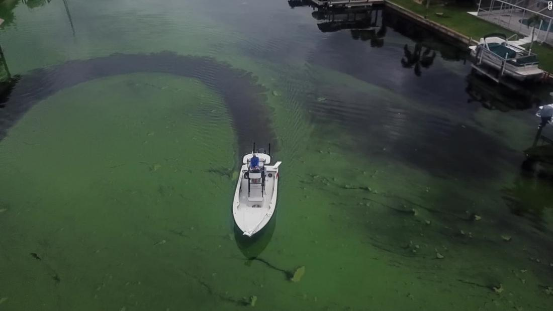 https://i2.wp.com/captainsforcleanwater.org/wp-content/uploads/2019/02/Captains-For-Clean-Water-Green-Algae-CNN.jpg?resize=1100%2C619&ssl=1