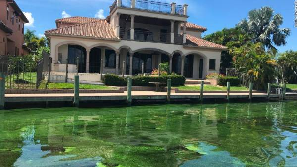 CNN: Green slime oozes into Florida's primary elections| Captains for Clean Water National Coverage